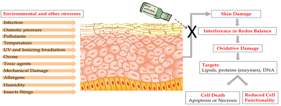 New nano-formula boosts skin's defense against free radicals