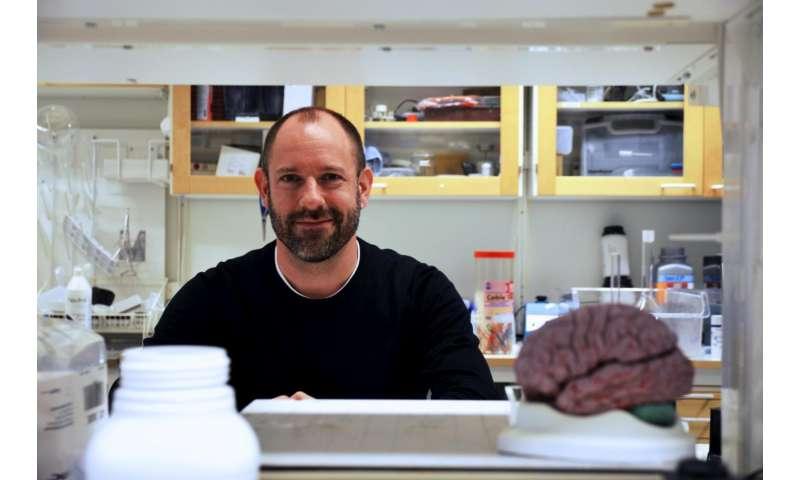 New principle for brain-controlled hormone secretion