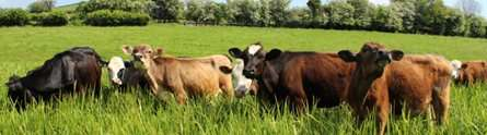 New report calls for improvements to U.K. cattle vaccination