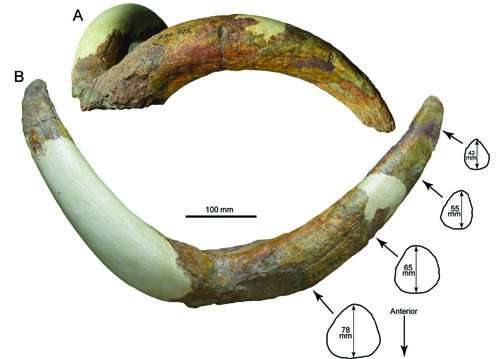 New species from the Pliocene of Tibet reveals origin of Ice Age mountain sheep