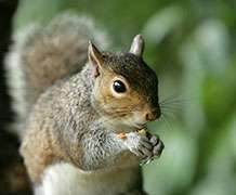 New study gives squirrels plenty of food for thought