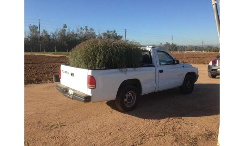 New tumbleweed species rapidly expanding range