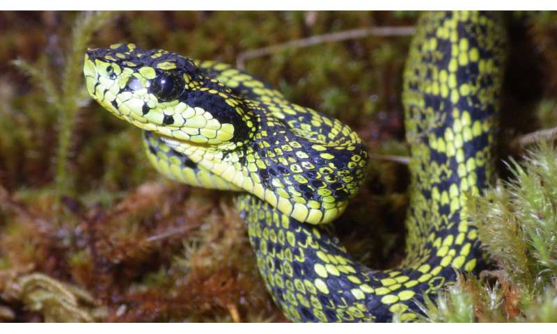 New venomous snake discovered in Costa Rica