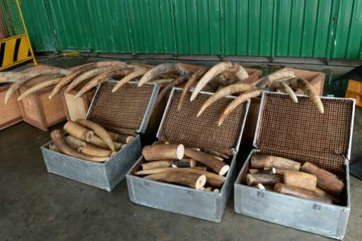New York City is a hub of illegal elephant ivory trade, ahead of California and Hawaii