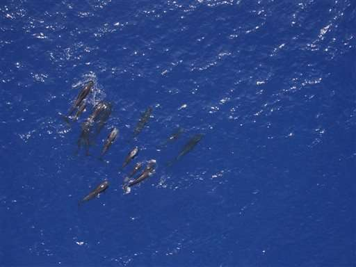NOAA: Drone technology aids whale research off Hawaii