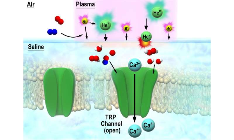 Nobel insight into interaction between discharge plasma and cells via TRP channel