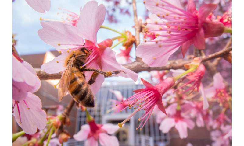 No junk-food diet: Even in cities, bees find flowers and avoid processed sugars