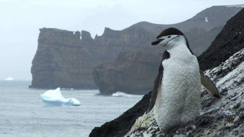Northern invaders threaten Antarctic marine life