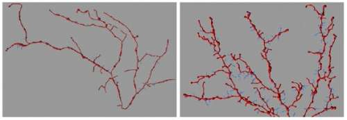 Novel mouse model sheds new light on autism spectrum disorder