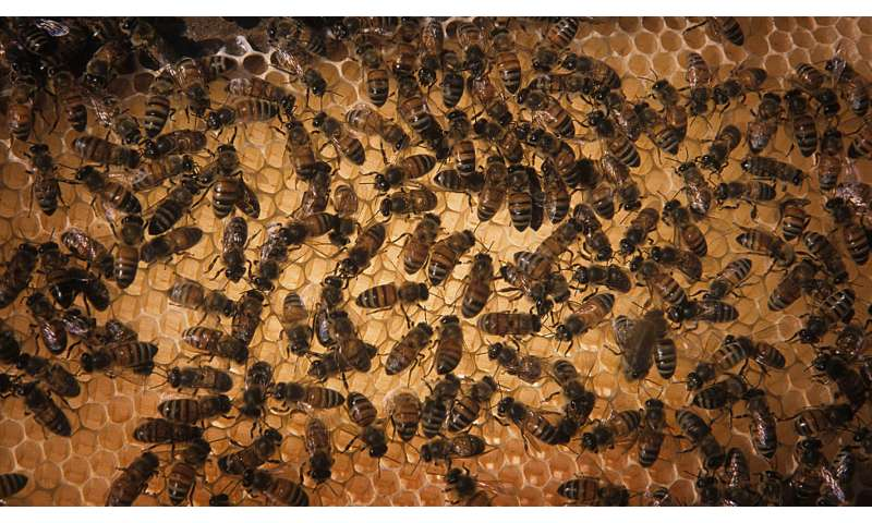 Nutrition matters: Stress from migratory beekeeping may be eased by access to food