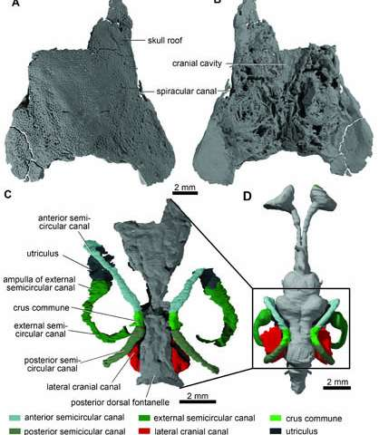 Oldest actinopterygian from China provides new evidence for origin of ray-finned fishes