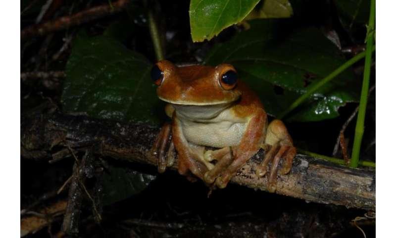 Old forest roads offer survival perspectives for amphibians
