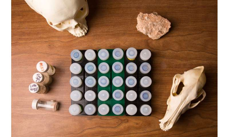 Old teeth, new stories: How one archaeologist created a prehistoric GPS for tracking ancient humans