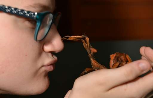 Olivia Fitzer holds a stick insect at a pet store in Sydney
