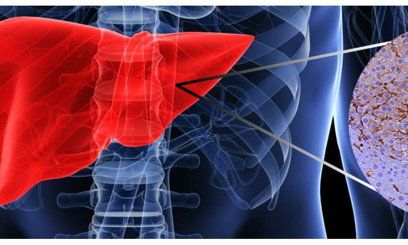 One more piece in the puzzle of liver cancer identified