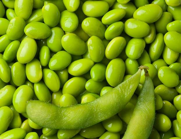 One step closer to commercial edamame production in the US