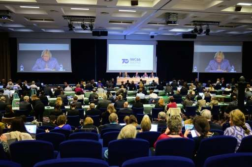 On October 24, 2016, more than 80 nations discussed the fate of the world's remaining whales at the 66th IWC meeting in Portoroz