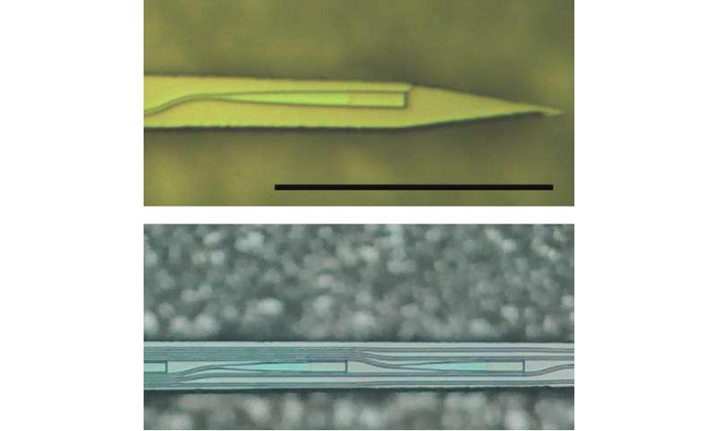 Optical probes overcome light scattering in deep-brain imaging, says Neurophotonics report