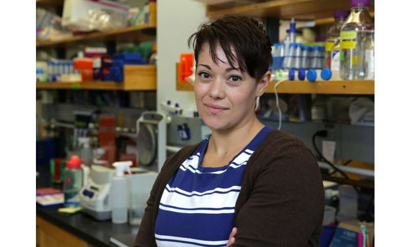 Oregon scientists link signaling network to heart valve defects