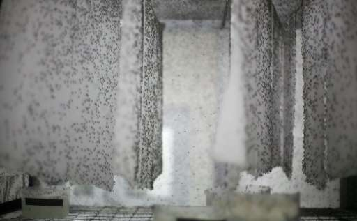Oxitec says its factory in the town of Piracicaba, northwest of Sao Paulo, can produce 60 million mutant mosquitoes a week