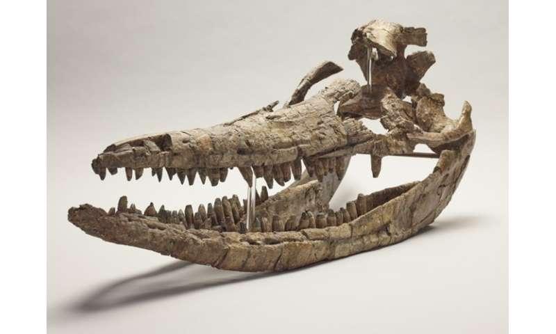 Palaeontologist helps to rebuild giant prehistoric sea creature