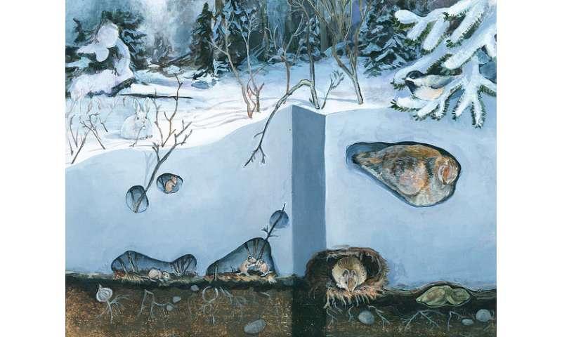 Peering into the secret world of life beneath winter snows
