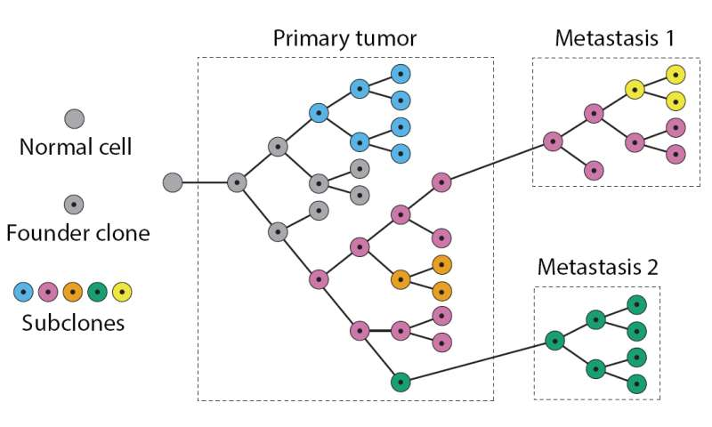 Penn software helps to identify course of cancer metastasis, tumor 'evolution'