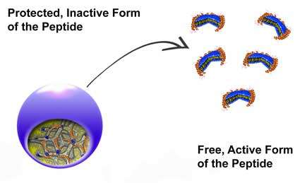 Peptides vs. superbugs