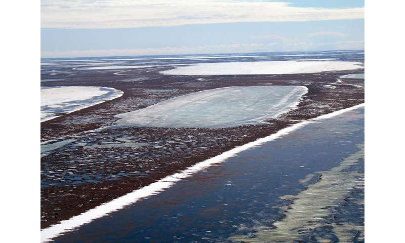 Permafrost thawing below shallow Arctic lakes