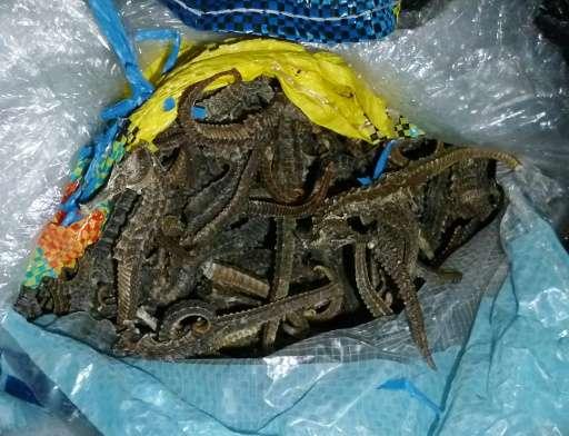 Peruvian authorities seized dried seahorses worth nearly $4 million