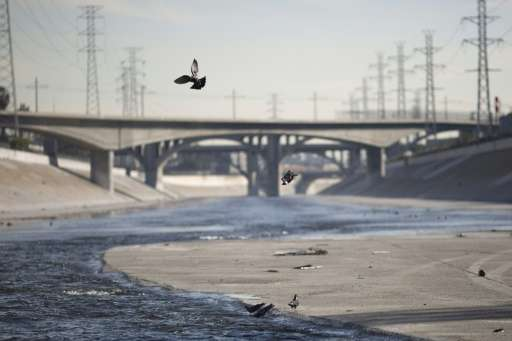 Pigeons fly over the Los Angeles River on November 20, 2015 California