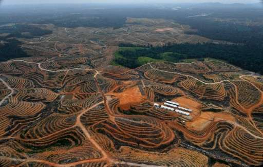 Plantations on Sumatra island and the Indonesian part of Borneo have expanded in recent years as demand for palm oil has skyrock