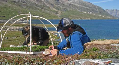 Plant gases can counteract Arctic climate change