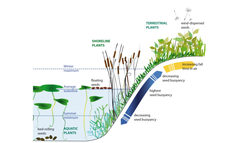 Plants actively direct their seeds via wind or water towards suitable sites