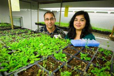 Plant signals travel different routes to turn on defense