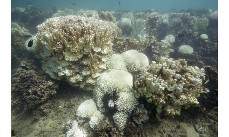 Promiscuity may help some corals survive bleaching events