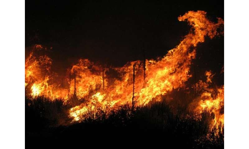 Protecting our forests this bushfire season