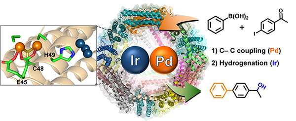 Protein cages for designing various catalytic reactions