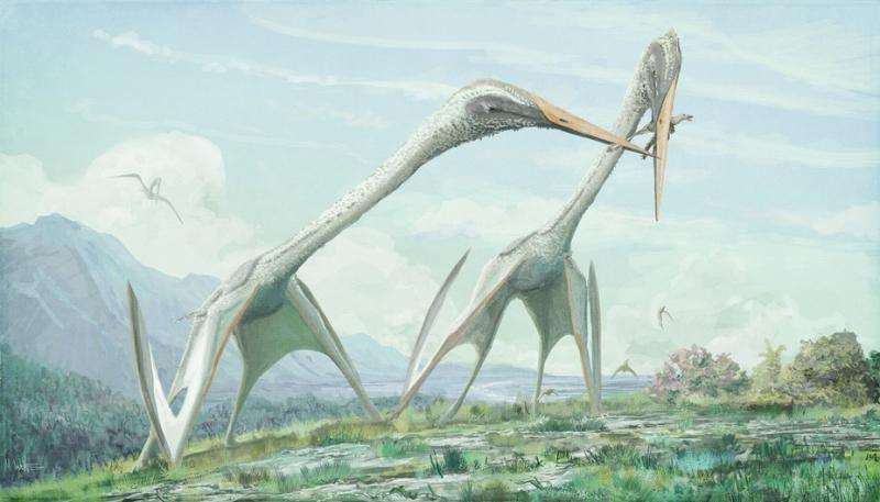 Pterosaurs should have been too big to fly – so how did they manage it?