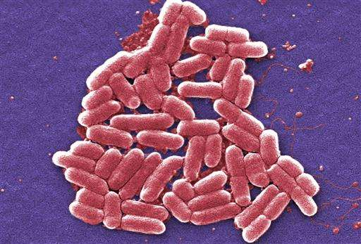 Q&A: Superbug precursor found in US again