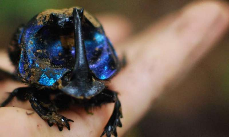 Rainforest study shows biodiversity loss worse than anticipated