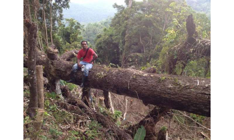 Regenerating forests create important carbon sinks in the Philippines