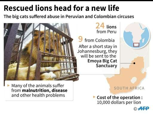 Rescued lions fly to a new home in South Africa