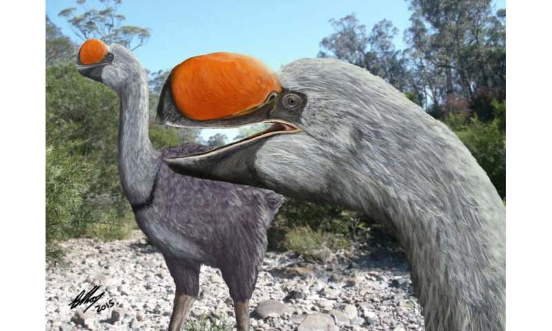 Researcher discovers ancestor of biggest bird ever