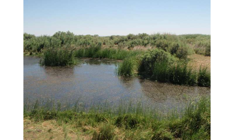 Resilient 'risky-and-reliable' plant use strategy may have driven Neolithization in Jordan