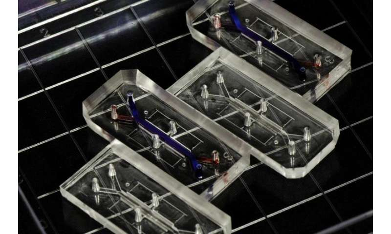 Reverse engineering human biology with organs-on-chips