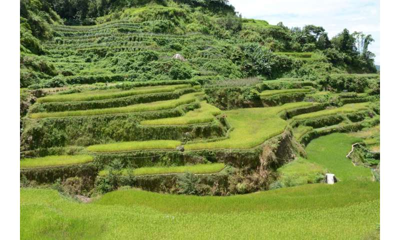 Rice cultivation in Southeast Asia: 5 years of lessons learned by LEGATO