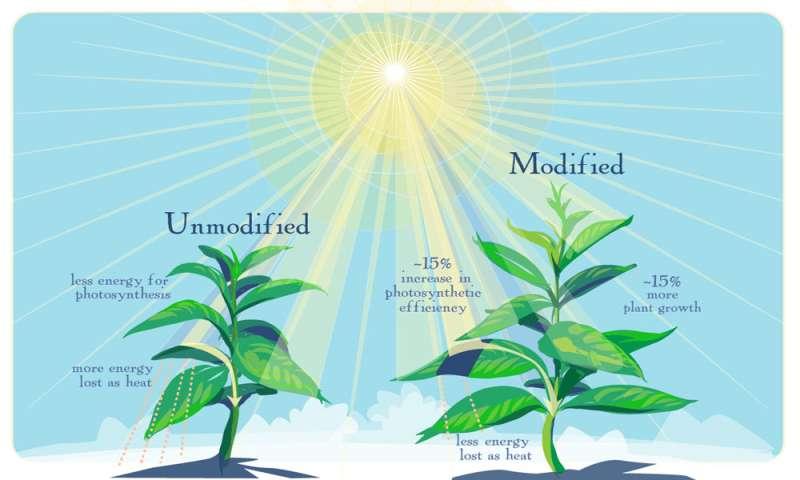 Scientists tweak photosynthesis to boost crop yield