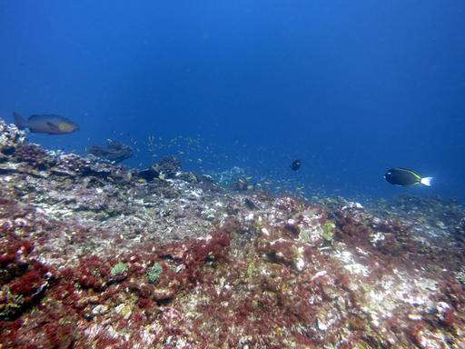 Scientists: Vibrant US marine reserve now a coral graveyard