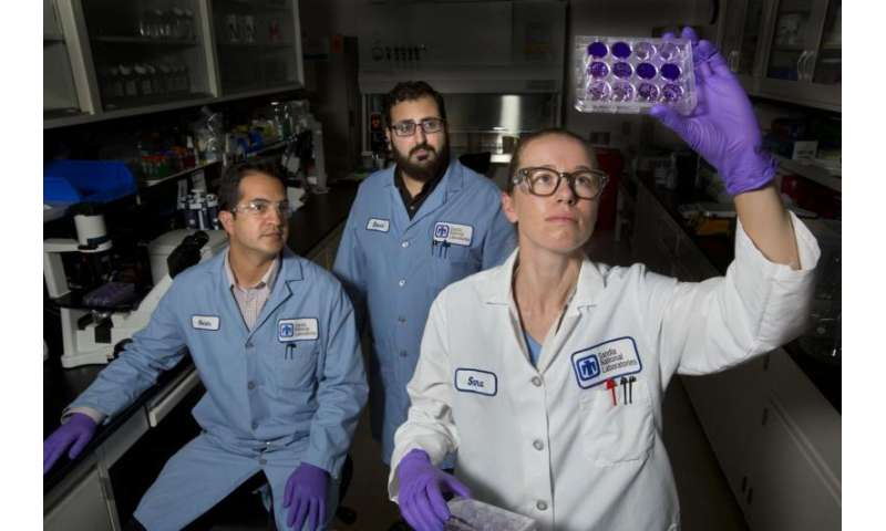 Screening libraries to discover drug targets for viral infections